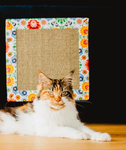 Koci drapak na kanapę Klei mi się - Hultaj - Swojacy