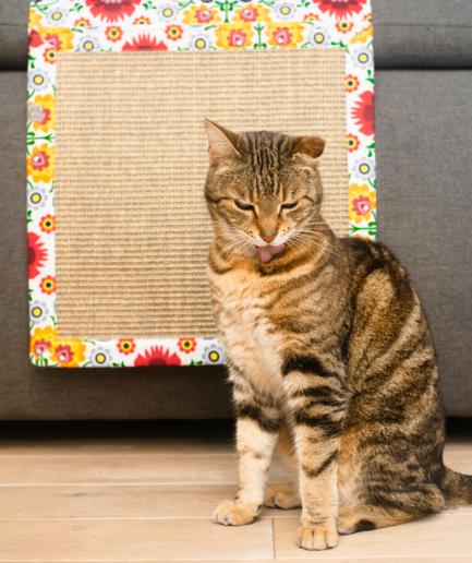 mata do drapania dla kota Panakota - mata dla kota wisząca hultaj swojacy