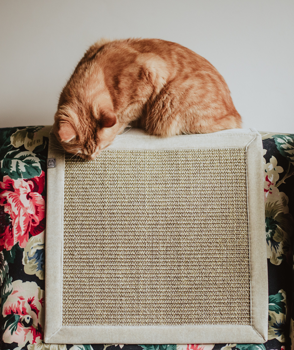 drapak dla kotów na kanapę, drapak dla kota