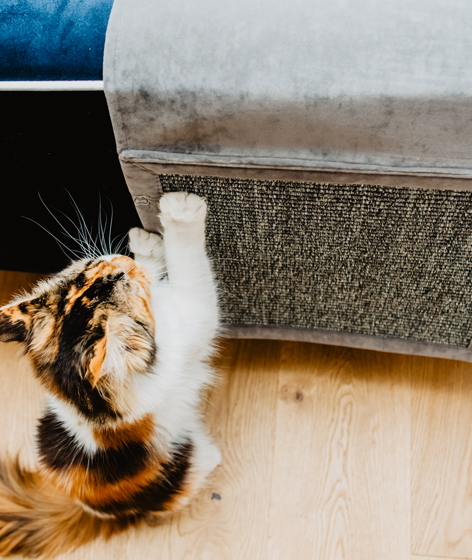 drapak dla kota na sofę, drapak dla kotów