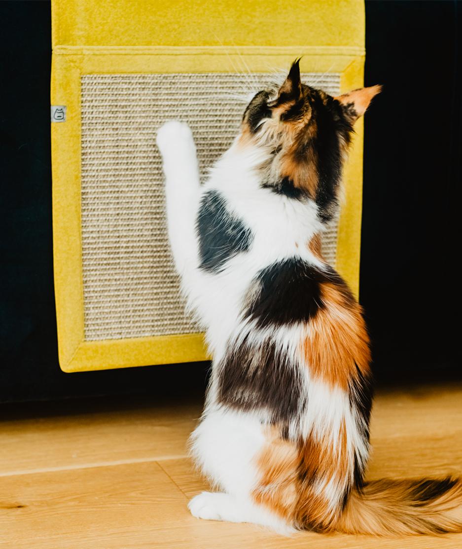 Panakota - mata dla kota wisząca hrabia złota brocha baronowej